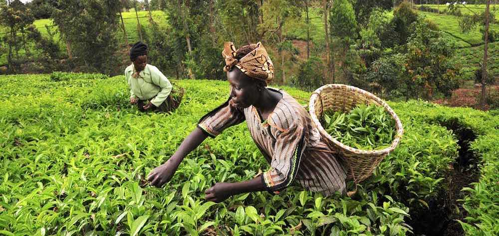 most profitable farming in nigeria