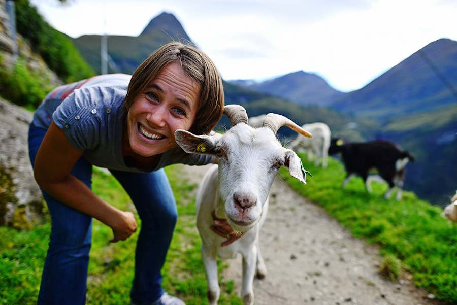 Commercial Goat Farming For Beginners • Profit and Business Tips