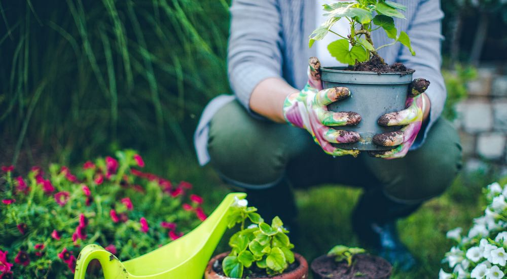 Starting A Gardening Business